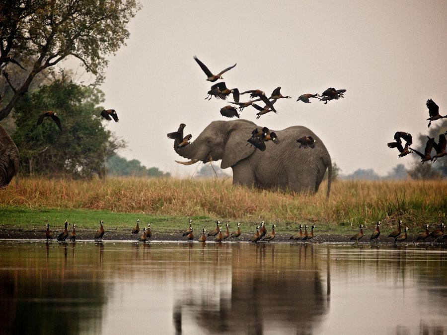 Foto von einem Elefanten von Millstone Animation