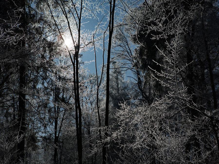 Foto Wald von Millstone Animation